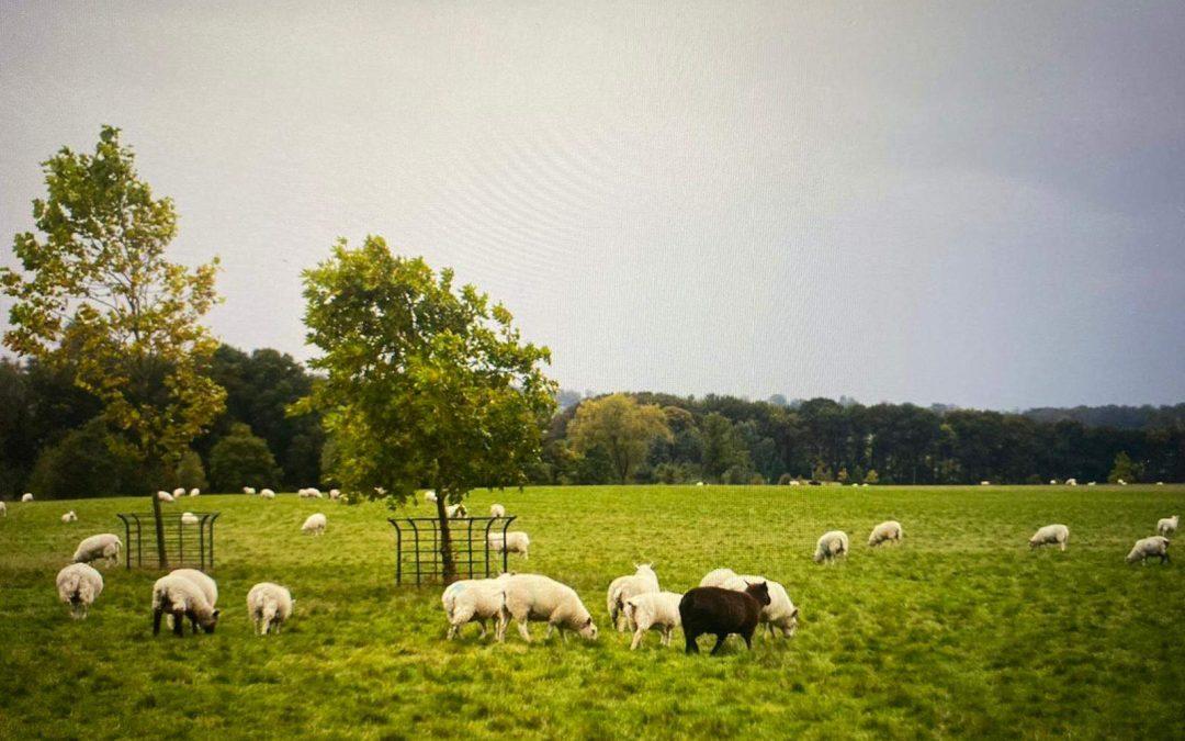 Ewhurst Park – the start of my farming journey